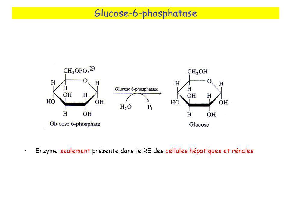 Glucose-6-phosphatase