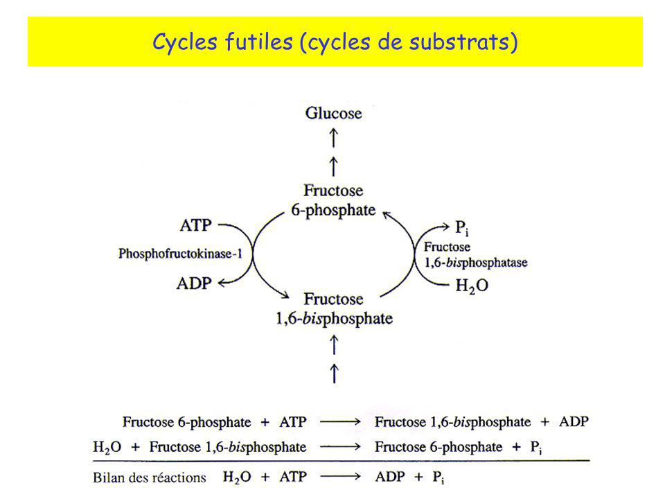 Cycles futiles (cycles de substrats)