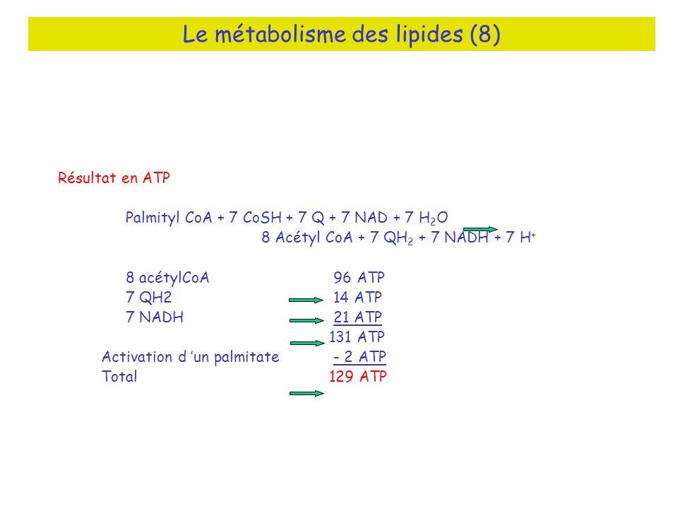 Le métabolisme des lipides (8)