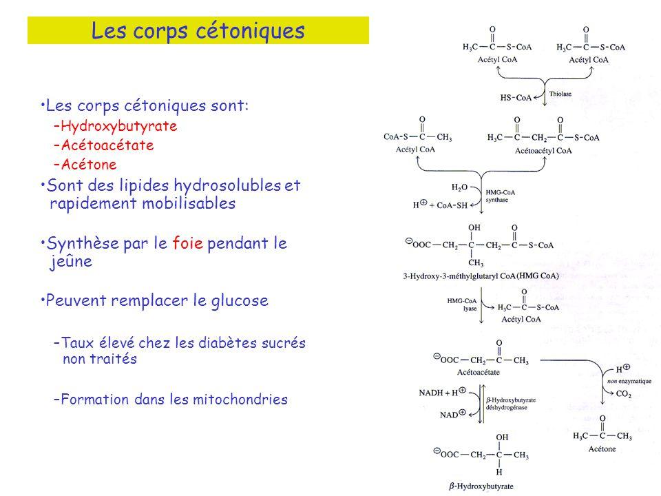 Les corps cétoniques Les corps cétoniques sont: