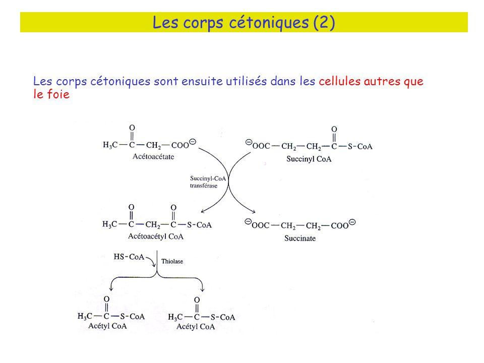 Les corps cétoniques (2)