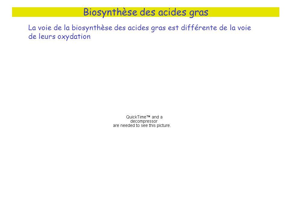 Biosynthèse des acides gras