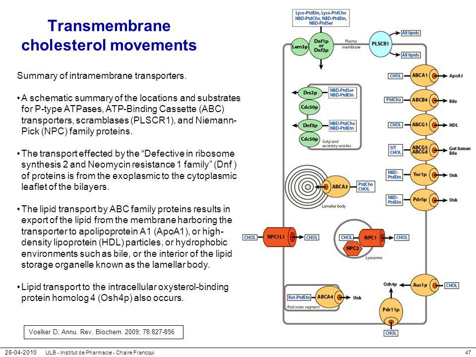 Transmembrane cholesterol movements