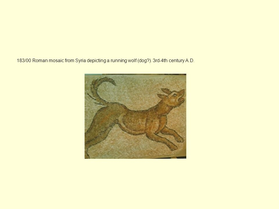 183/00 Roman mosaic from Syria depicting a running wolf (dog. )