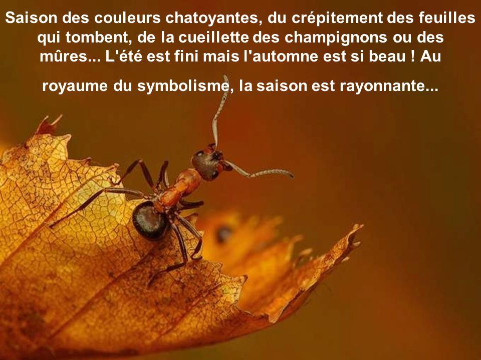 Saison des couleurs chatoyantes, du crépitement des feuilles qui tombent, de la cueillette des champignons ou des mûres...