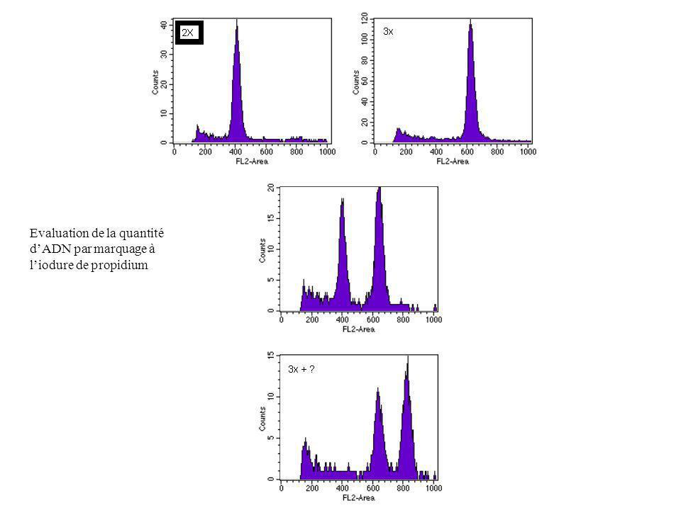 Evaluation de la quantité d'ADN par marquage à l'iodure de propidium