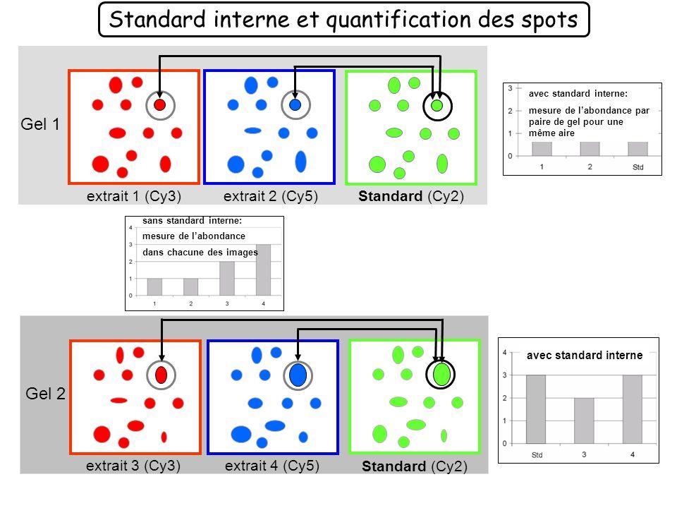 Standard interne et quantification des spots