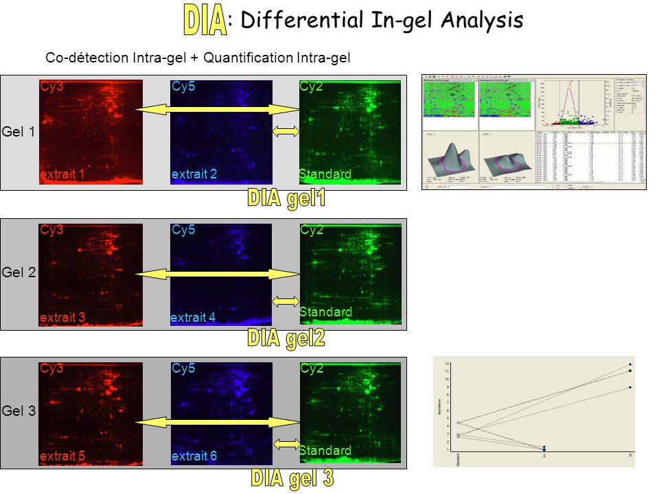 : Differential In-gel Analysis