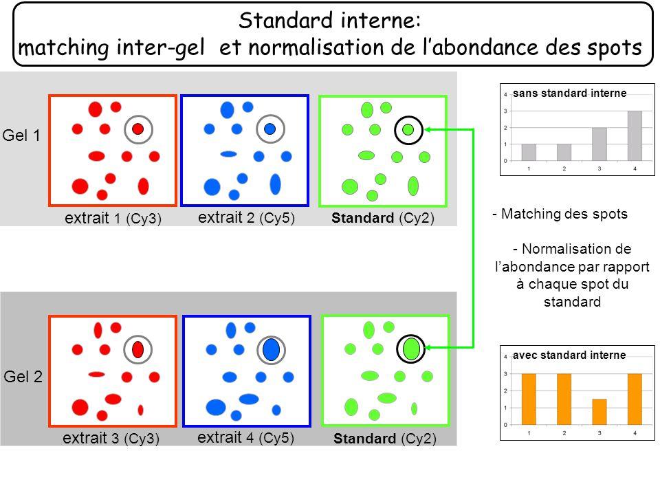 - Normalisation de l'abondance par rapport à chaque spot du standard