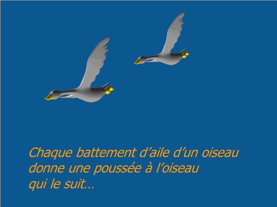 Chaque battement d'aile d'un oiseau donne une poussée à l'oiseau qui le suit…