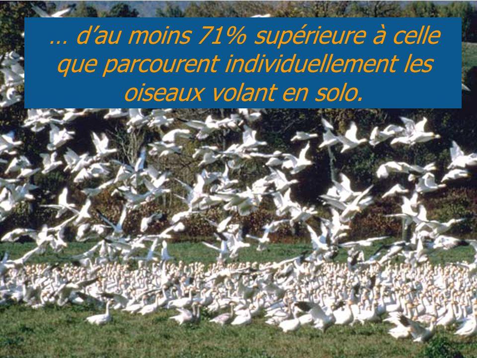 … d'au moins 71% supérieure à celle que parcourent individuellement les oiseaux volant en solo.