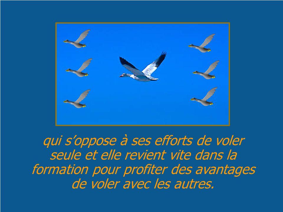 qui s'oppose à ses efforts de voler seule et elle revient vite dans la formation pour profiter des avantages de voler avec les autres.