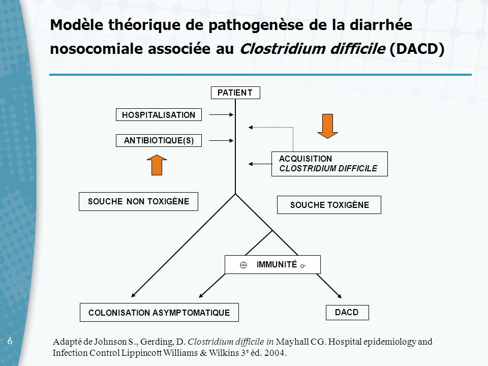 Modèle théorique de pathogenèse de la diarrhée nosocomiale associée au Clostridium difficile (DACD)