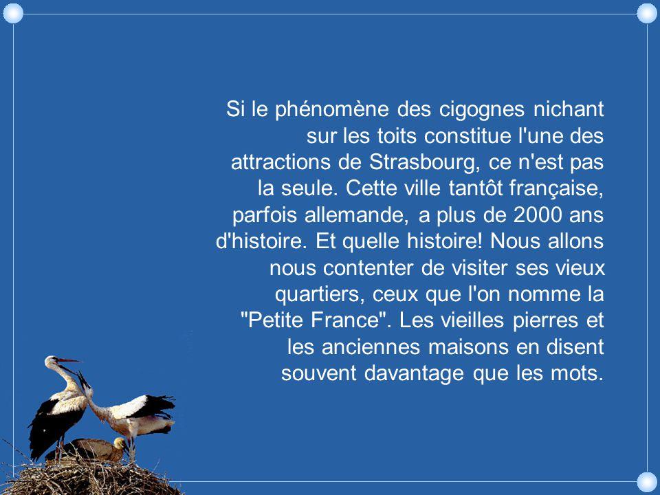 Si le phénomène des cigognes nichant sur les toits constitue l une des attractions de Strasbourg, ce n est pas la seule.
