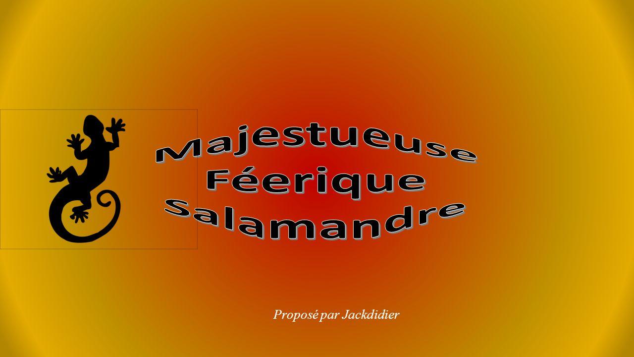 Majestueuse Féerique Salamandre