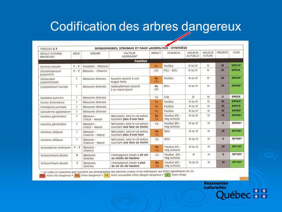 Codification des arbres dangereux