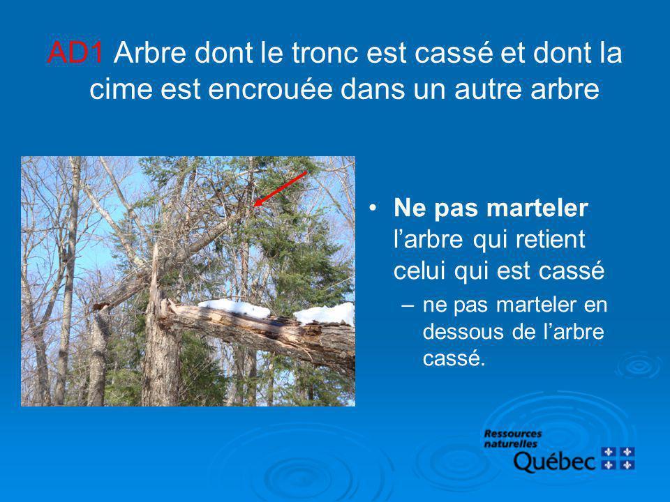 AD1 Arbre dont le tronc est cassé et dont la cime est encrouée dans un autre arbre