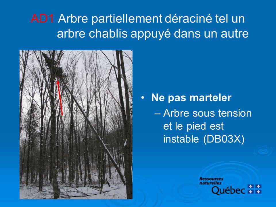 AD1 Arbre partiellement déraciné tel un arbre chablis appuyé dans un autre