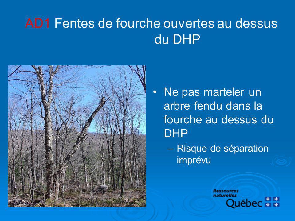 AD1 Fentes de fourche ouvertes au dessus du DHP