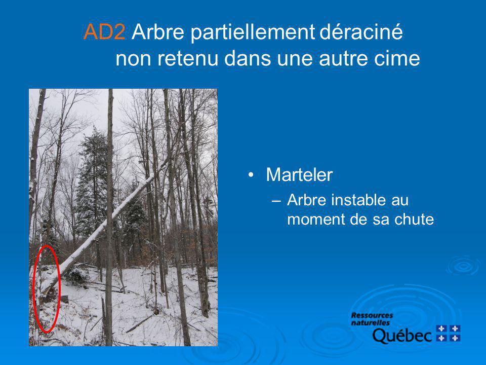 AD2 Arbre partiellement déraciné non retenu dans une autre cime