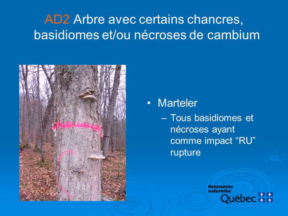AD2 Arbre avec certains chancres, basidiomes et/ou nécroses de cambium