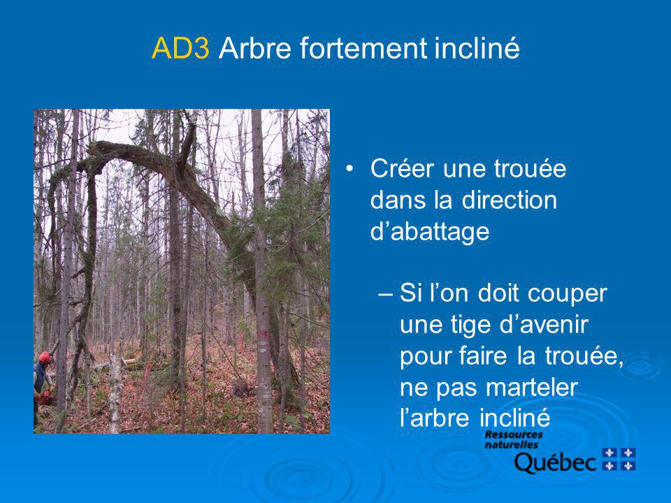 AD3 Arbre fortement incliné