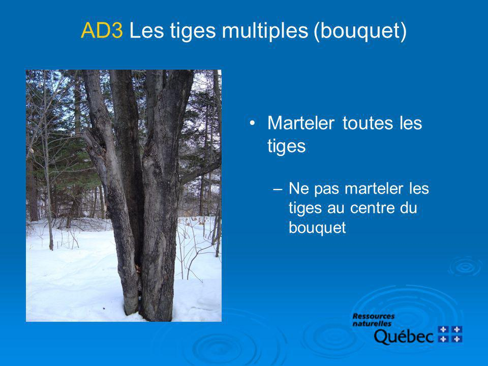 AD3 Les tiges multiples (bouquet)