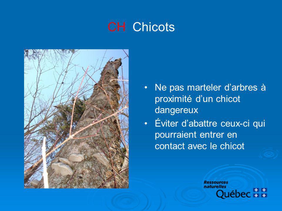 CH Chicots Ne pas marteler d'arbres à proximité d'un chicot dangereux