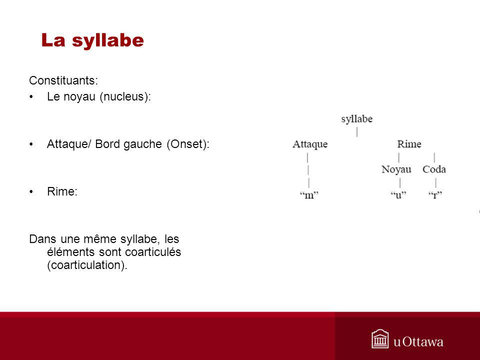 La syllabe Constituants: Le noyau (nucleus):