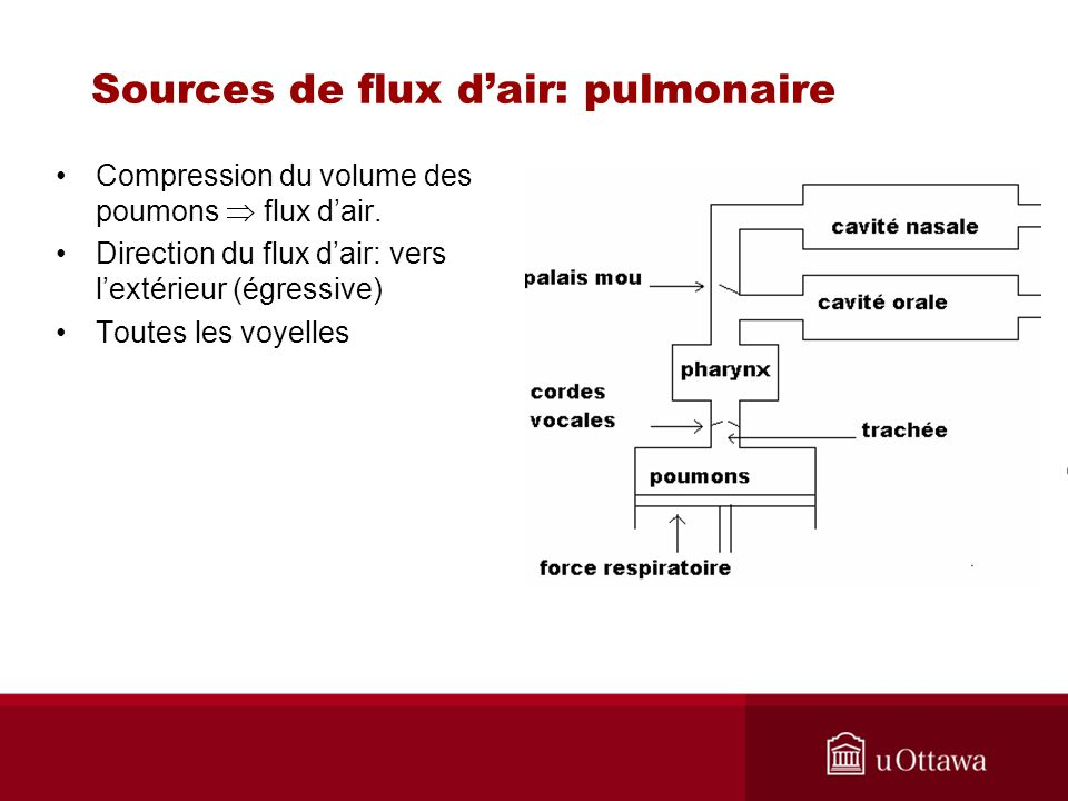 Sources de flux d'air: pulmonaire