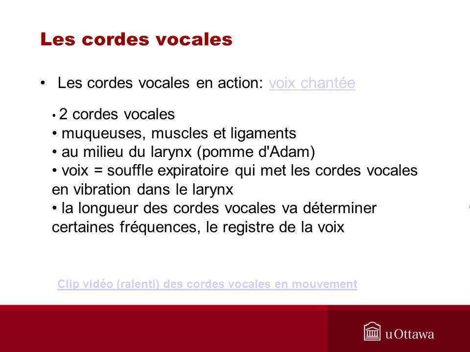 Les cordes vocales Les cordes vocales en action: voix chantée