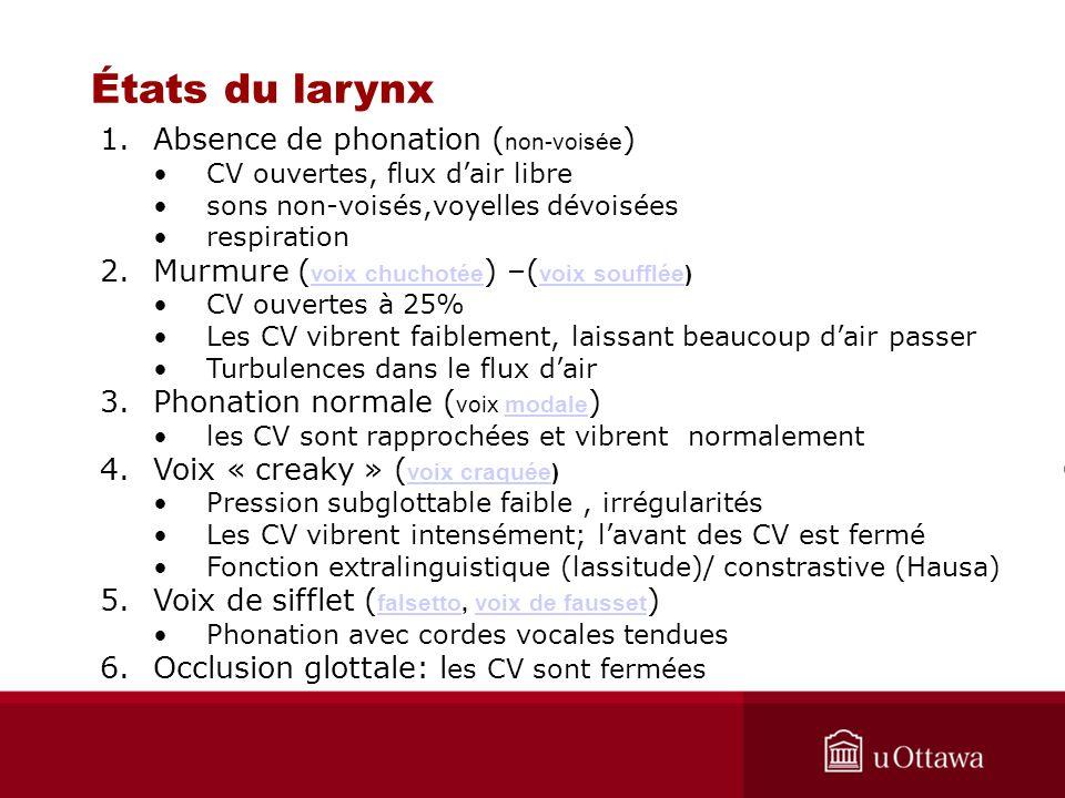 lin 1720 cours 4  u00c9tats du larynx
