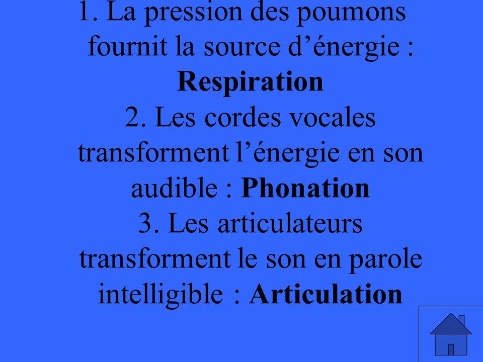 1. La pression des poumons fournit la source d'énergie : Respiration 2