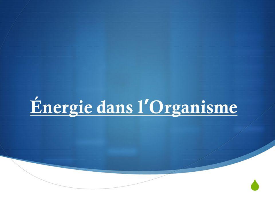 Énergie dans l'Organisme