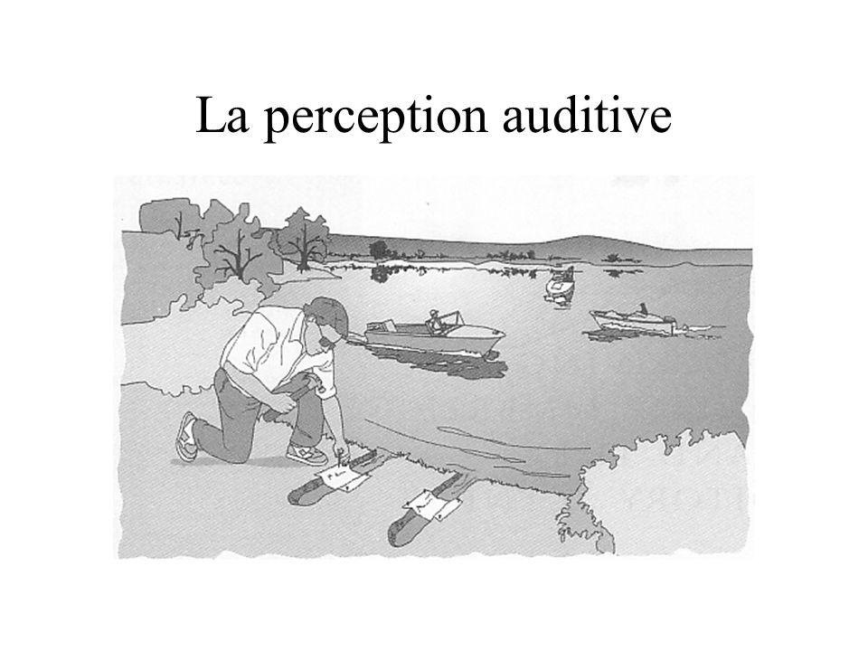 La perception auditive