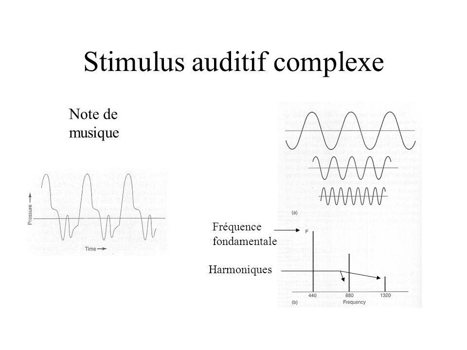 Stimulus auditif complexe