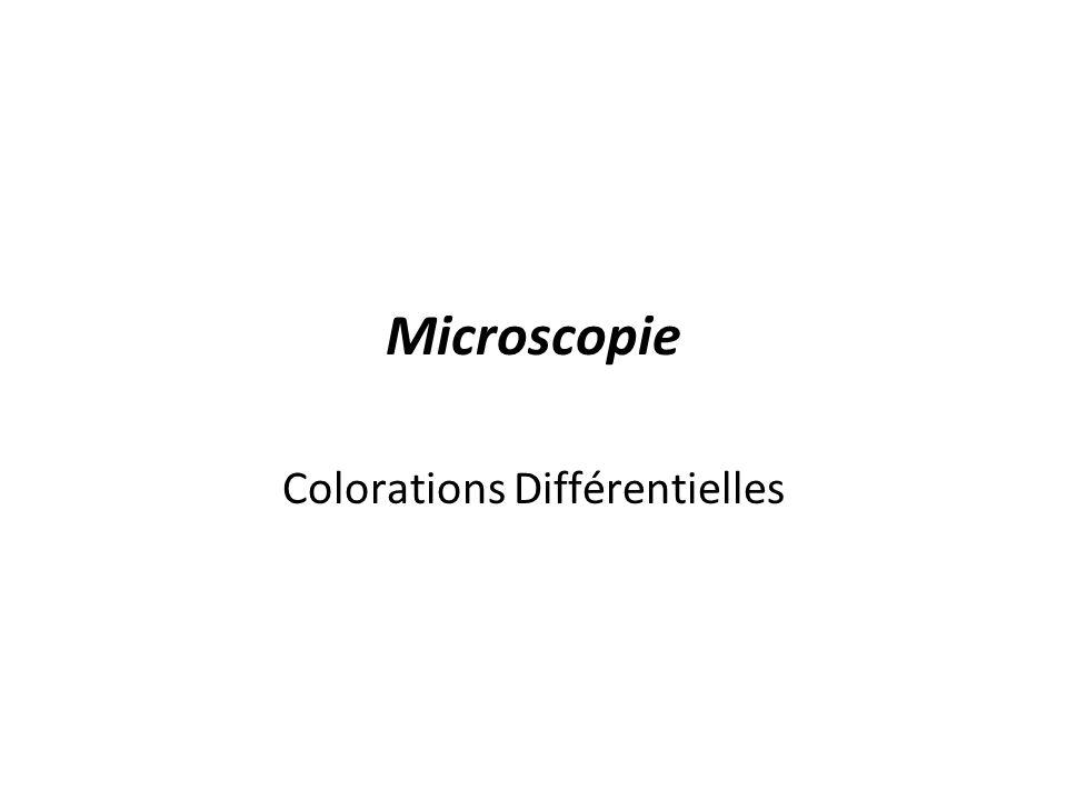 Colorations Différentielles