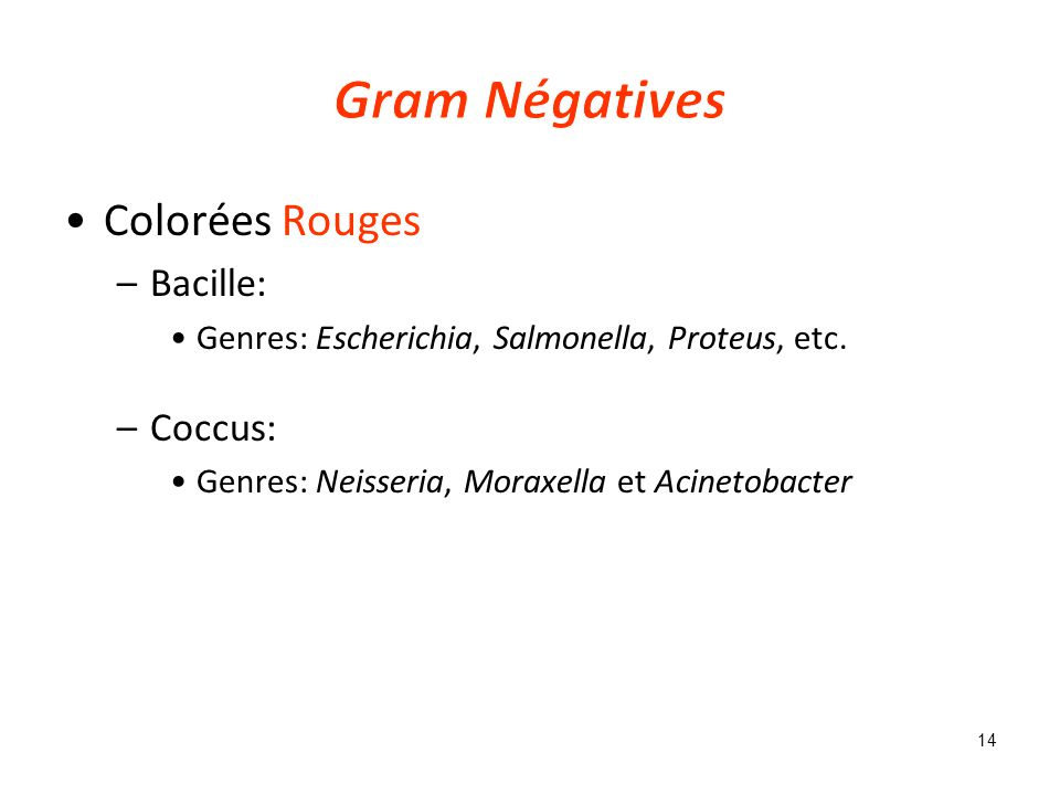Gram Négatives Colorées Rouges Bacille: Coccus: