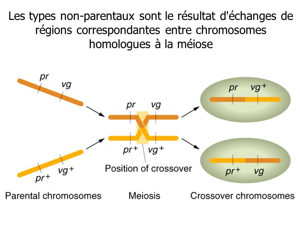 Les types non-parentaux sont le résultat d échanges de régions correspondantes entre chromosomes homologues à la méiose