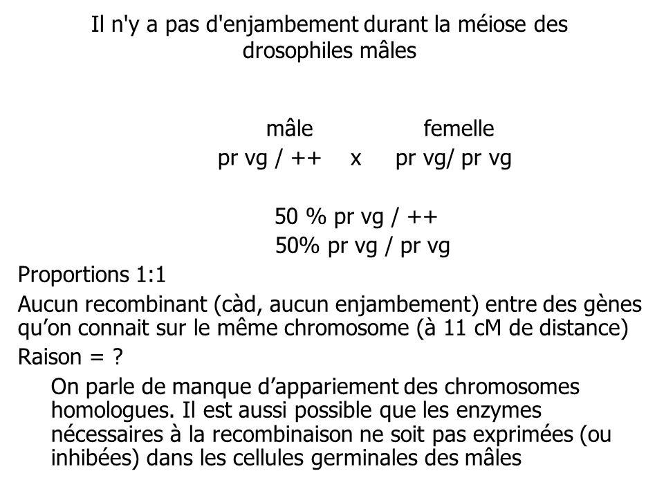 Il n y a pas d enjambement durant la méiose des drosophiles mâles