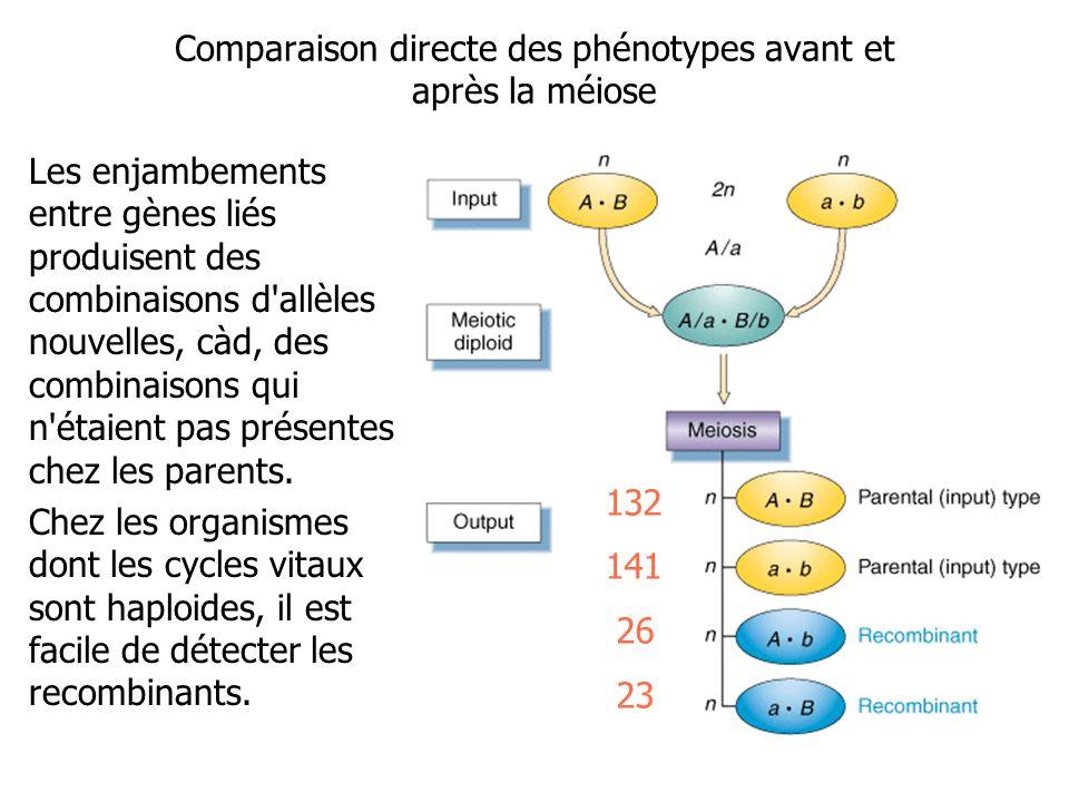 Comparaison directe des phénotypes avant et après la méiose