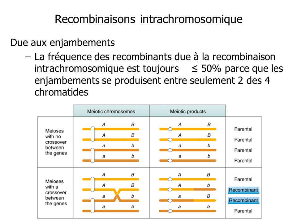 Recombinaisons intrachromosomique