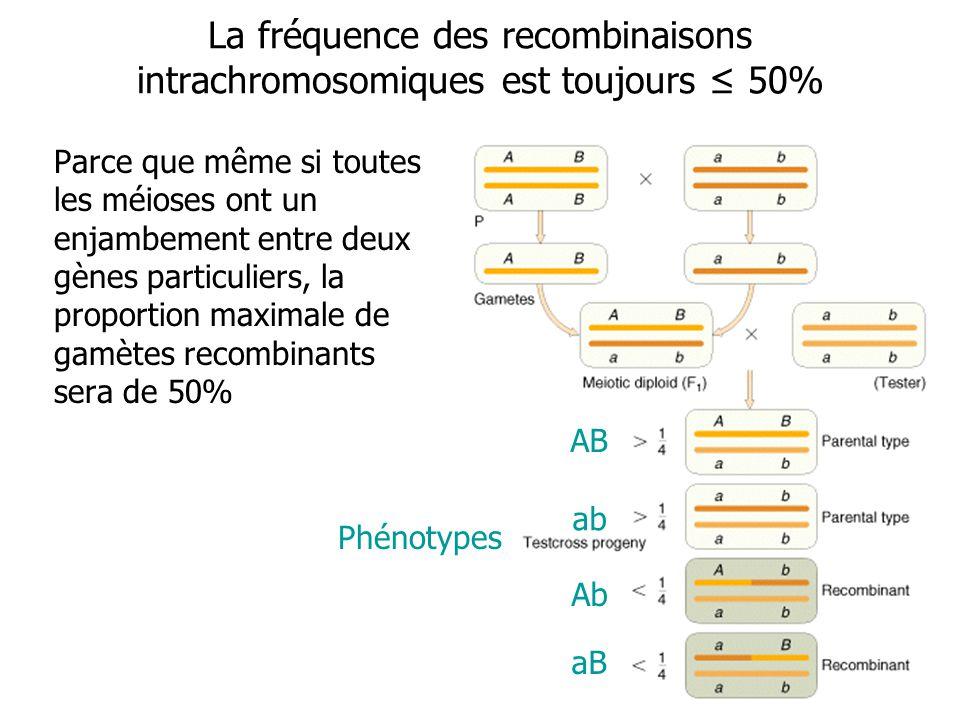 La fréquence des recombinaisons intrachromosomiques est toujours ≤ 50%