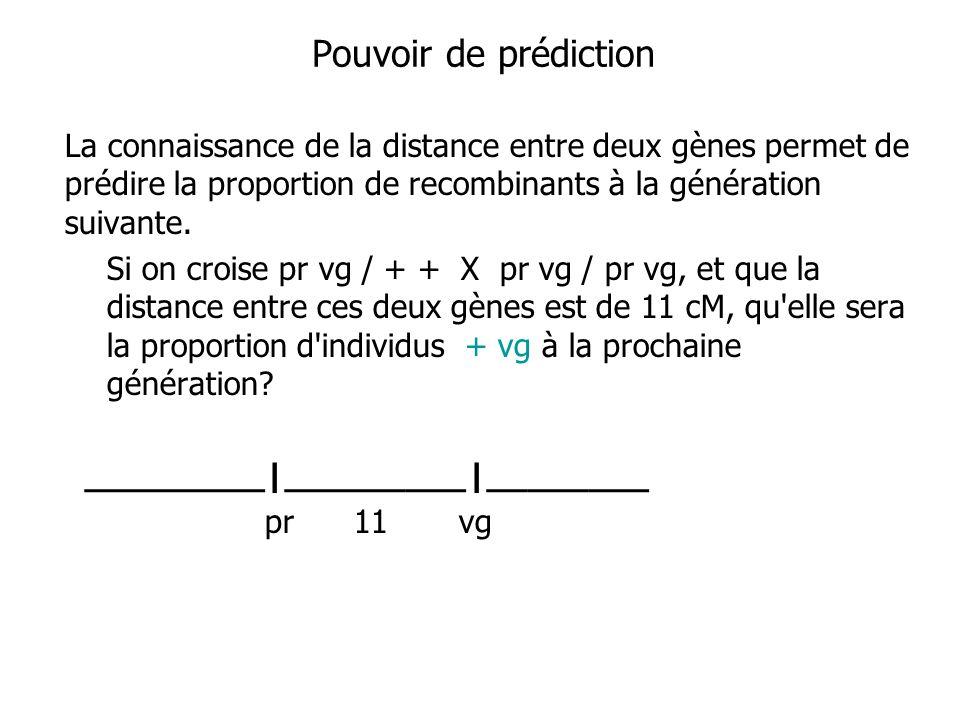 Pouvoir de prédiction La connaissance de la distance entre deux gènes permet de prédire la proportion de recombinants à la génération suivante.