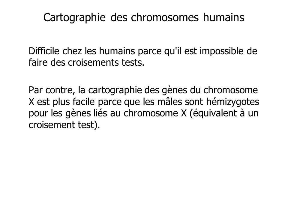 Cartographie des chromosomes humains
