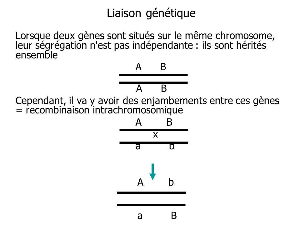 Liaison génétique Lorsque deux gènes sont situés sur le même chromosome, leur ségrégation n est pas indépendante : ils sont hérités ensemble.