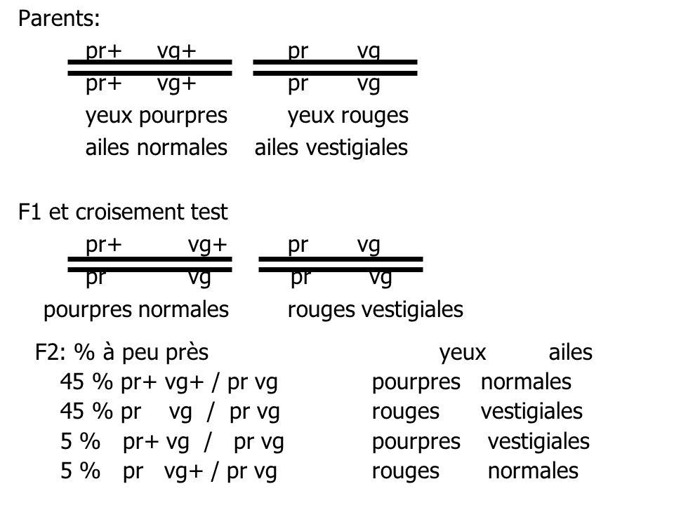 Parents: pr+ vg+ pr vg. pr+ vg+ pr vg. yeux pourpres yeux rouges. ailes normales ailes vestigiales.