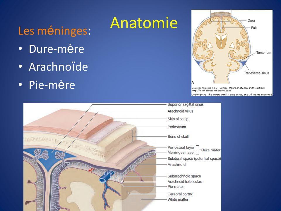 Anatomie Les méninges: Dure-mère Arachnoïde Pie-mère 15