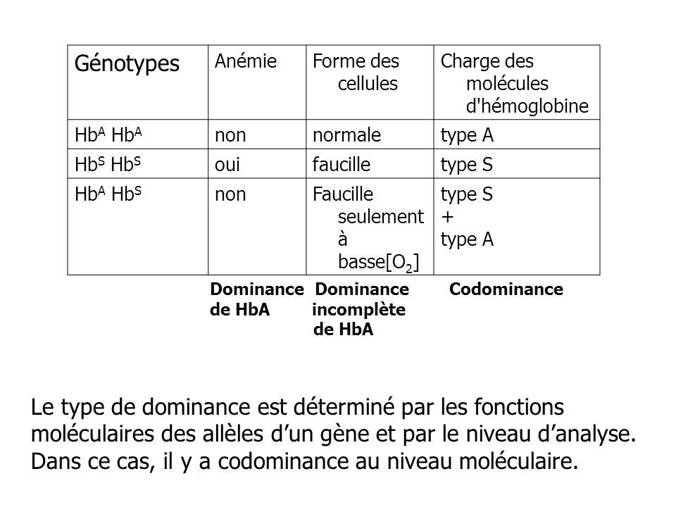 Génotypes Anémie. Forme des cellules. Charge des molécules d hémoglobine. HbA HbA. non. normale.