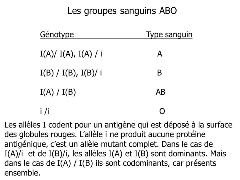 Les groupes sanguins ABO